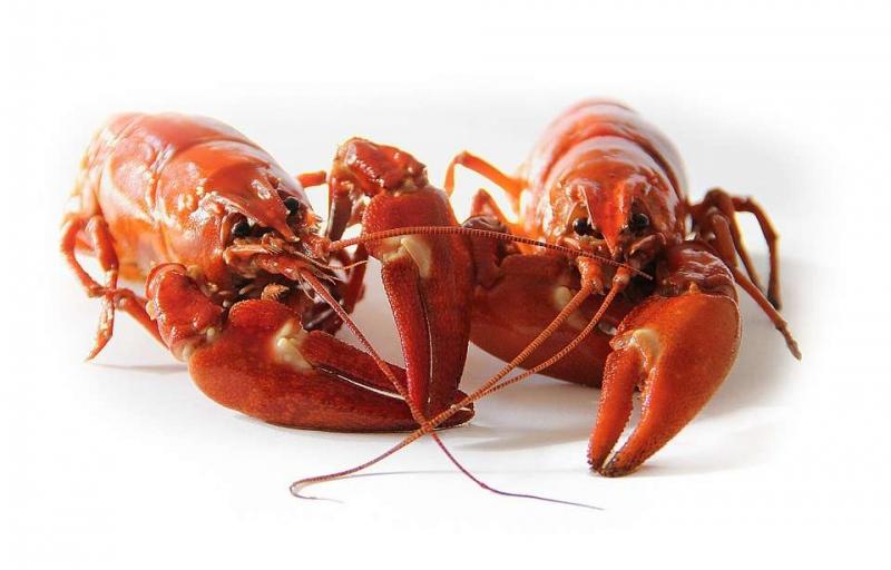 乙肝病人可以吃海鲜吗乙肝病人该怎么护理才好呢