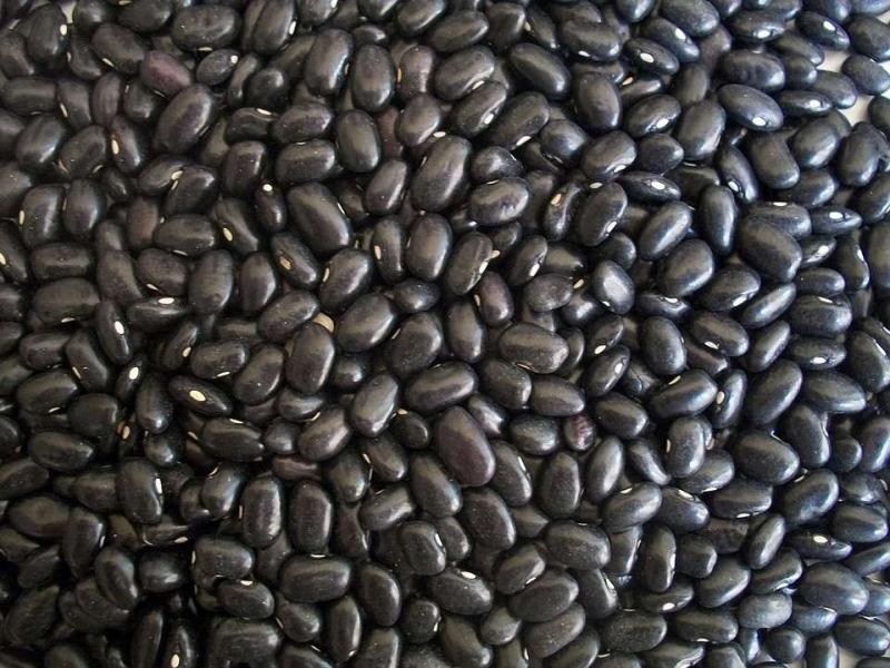 黑豆可以补肾阳虚吗黑豆补肾阴的食疗方有哪些